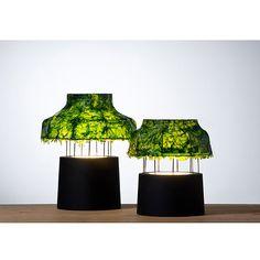 Marine Light - lamps made of seaweed