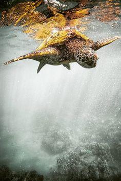 Share photos of underwater life. Especie Animal, Mundo Animal, Ocean Creatures, All Gods Creatures, Animals Beautiful, Beautiful Creatures, Tortoise Turtle, Turtle Love, Underwater Life