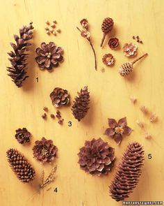 Lay your eye level with the scales of the pinecone and you'll find that each one is as beautifully wrought as a flower petal. This resemblance inspired us to turn pinecones into lustrous golden-brown blossoms, perfect for table decorations and gift embellishments that will last not only for this Thanksgiving and Christmas, but for many holiday seasons to come.