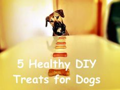 5 Healthy DIY Treats for Dogs – Project Pawsitivity Homemade Dog Treats, Pet Treats, Healthy Dog Treats, Animals For Kids, Animals And Pets, Dog Care, Dog Training, Labrador Retriever, Good Things