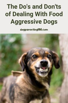 Have you ever tried to take the bowl away from your dog while he was eating? Has it almost cost you a limb? That's food aggression and here's what to do about it. #aggressionindogs #aggressivedog #resourceguarding #trainyourdog Dog Health Tips, Pet Health, Health Care, Pet Sitters International, Pet Dogs, Pets, Doggies, Aggressive Dog, Dog Training Tips