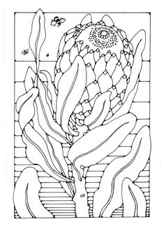 Flowers to Colour, 62 different pages to print out in US Letter Format Flowers to Colour 62 differen Protea Art, Protea Flower, Colouring Pages, Coloring Sheets, Free Coloring, Australian Native Flowers, Flower Sketches, Mosaic Patterns, Pictures To Paint