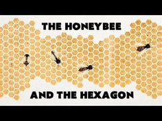 The Bees | Learning For Round Pegs