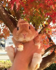 Bunny and Autumn leaves