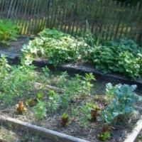 How to Grow A Home Vegetable Garden