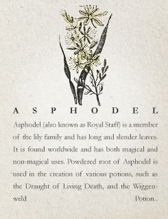 Asphodel (all my info is on the page)