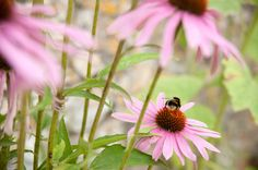Trill Organic Farm, East Devon. An Introduction to Beekeeping. 26th March 2015 and  23rd September 2015. One day course with Neil Lakin, includes a seasonal organic lunch http://www.organicholidays.co.uk/at/2808.htm