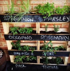 Nice herb garden.  Good way to keep plants controlled & small, but have tons of herb variety.