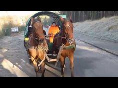 Wdzydze Kiszewskie - noworoczny kulig bez śniegu :)