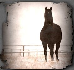 Black horse fine art photography winter distressed by Myartspace, $20.00