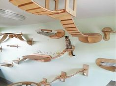 Or you can make a cat playground so all the cats in the house can enjoy! – Home ideas Or you can make a cat playground so all the cats in the house can enjoy! – Home ideas – Cat Walkway, Gatos Cat, Cat Heaven, Cat Playground, Indoor Playground, Playground Ideas, Fancy Cats, Cat Climbing, Cat Room