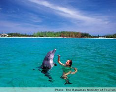 Swim With Dolphins Bahamas. Plan a trip to swim with dolphins Bahamas and find the best place to swim with a dolphin in Bahamas. Need A Vacation, Dream Vacations, Dolphin Encounters, Bahamas Island, Paradise Island, Nassau, Riviera Maya, Dolphins, Places To See