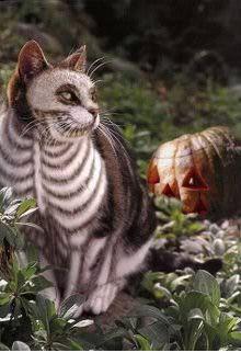 Halloween Cat...this is creepy!