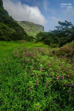 Beautiful Salalh - Oman Sultanate Of Oman, Salalah, Arabian Peninsula, Arabian Sea, United Arab Emirates, Saudi Arabia, Jerusalem, Continents, Middle East