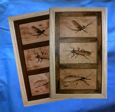 framework with three inlaid insects, the size of the insect is of the boxes for flies