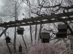 birdhouses hanging in the fog & frost - the ladder is a nice design device to group like items while maintaining the potential for birds' home building. Are they actually using them?
