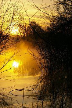 Golden Morning by bamako