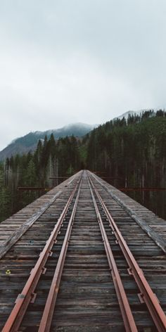 Vance Creek Bridge: How America's 2nd tallest bridge became a viral sensation #travel #roadtrips #roadtrippers