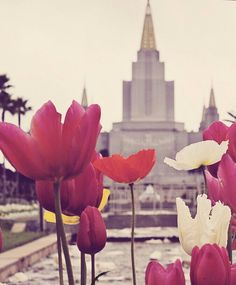 Lds Oakland temple