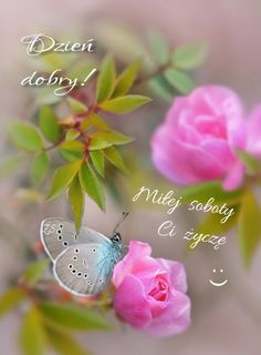 Butterfly Pictures, Butterfly Flowers, Flower Images, Beautiful Butterflies, Amazing Flowers, Beautiful Roses, Beautiful Images, Pink Flowers, Beautiful Flowers