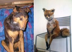19 Cases Of Horrible Taxidermy – When preserving animals goes very wrong