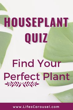 [Houseplant Quiz] Find Your Perfect Houseplant House Plant Care, House Plants, Growing Vegetables Indoors, Types Of Houseplants, Modern Hipster, Easy Plants To Grow, Low Light Plants, Mosquito Repelling Plants, Perfect Plants