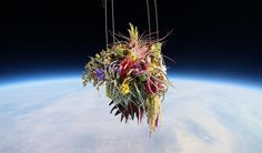 A bouquet of flowers 98,000 feet above our heads!