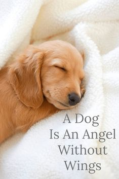 A Dog Is An Angel Without Wings.(just some doggy chat!) Come and meet me and the gang at waggytalesblog.com. There is loads of information about dog health, training, rescue dogs and book reviews. Call in and say hi and tell us about your dogs. Join the waggytalesblog Facebook page too! Keep those tails wagging!