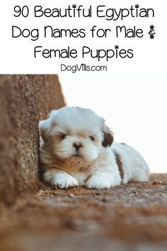 If you're searching for some of the most spectacular Egyptian dog names, we've got you covered! Check out 90 great ideas for male & female pups! Therapy Dog Training, Therapy Dogs, Potty Training, Female Dog Names, Pet Names, Best Dog Toys, Best Dogs, Funny Cats And Dogs, Dog Rules