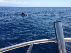 Playing with dolphins en route to Catalina island!