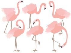 OFF SALE Flamingo Clipart - Digital Vector Flamingo, Flamingos Clipart, Vector Flamingo, Flamingo Graphics, Coral Flamingo Clip Art Flamingo Clip Art, Flamingo Vector, Flamingo Bird, Pink Flamingos, Flamingo Craft, Free Vector Images, Vector Free, Eps Vector, Makeup Clipart