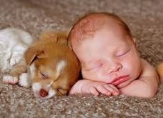 Photography of baby and their pet puppy