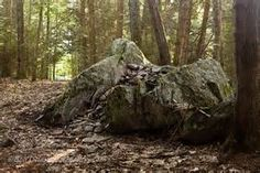 boulders in forest - Bing Images