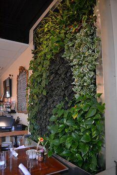 Living Wall in St. Ivy Wall, Rock Hill, Massage Room, Green Walls, Dream Bedroom, St Louis, Greenery, Indoor, Urban