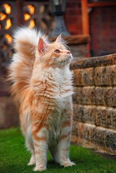 Cute and Nice Cat