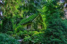 Maison insolite et merveilleuse au Canada, perdu dans la foret ...