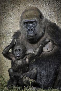 Joanne e seu bebê Imani no San Diego Zoo Safari Park 12-21-14 | Flickr - Compartilhamento de fotos!