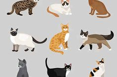 Only A Cat Person Can Get More Than 70% In This Quiz