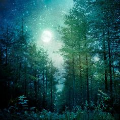 Nature Photography, Enchanted Forest, Trees, Moon and Stars, Fine Art print, Home Decor.