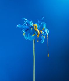 Dripping Project Depicts The Beauty Of Nature | Trendland