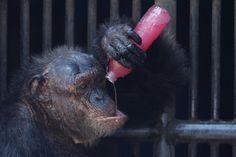 Interesting photos with animals 05