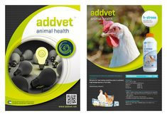h-stress stress product for poultry, by addvet jordan, feed additives, herbal, bio product products
