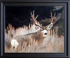 Framed Art measures 19x23 inches, Art Print measures 16x20 inches Eco Friendly Frame, Real Glass Front. Custom Finished and Professionally framed in California, USA Frame has Hardware attached & arrives Ready to Hang out of the box BRAND NEW in MINT condition