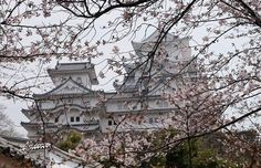 Sakura,Himeji castle