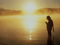 Silhouetted Fly Fish