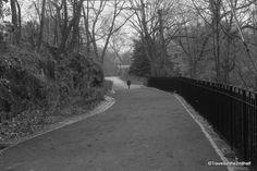 Walking Through the NY Botanical Gardens: a Winter's Day