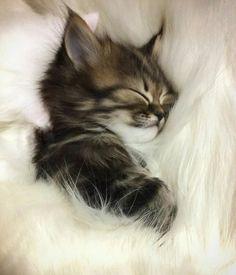 Comfy and soft sleep for kitty!