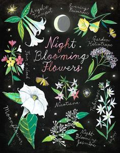 🌕🌷 New art! Prints in my shop :) Who else blooms at night? I get so inspired and creative in the quiet/dark hours. Night Garden, Moon Garden, Dream Garden, Garden Gate, Night Blooming Flowers, Night Flowers, Daisy Art, Acrylic Artwork, Deco