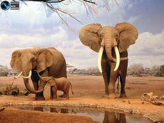 Фотографии удивительных животных