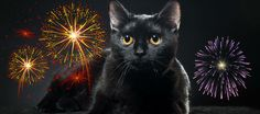 Why are cats and dogs scared of fireworks, storms, and other loud noises like vacuums? Litter Robot, Cat Noises, Information About Cats, Cat In Heat, Scared Cat, Dog Stories, Cat Friendly Home, Pet Safe